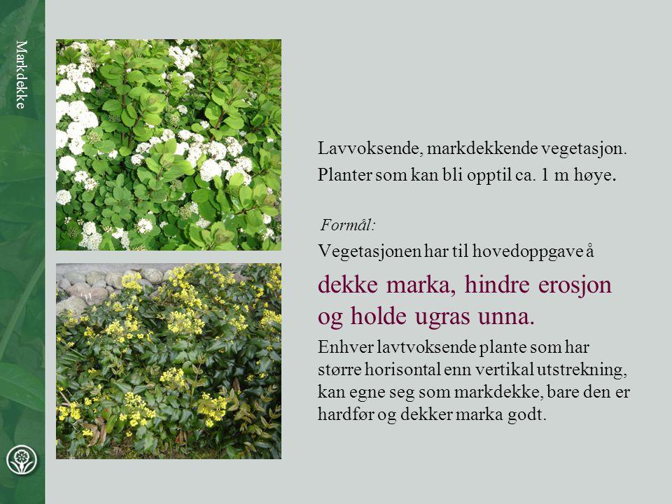 Lavvoksende, markdekkende vegetasjon. Planter som kan bli opptil ca. 1 m høye. Formål: Vegetasjonen har til hovedoppgave å dekke marka, hindre erosjon
