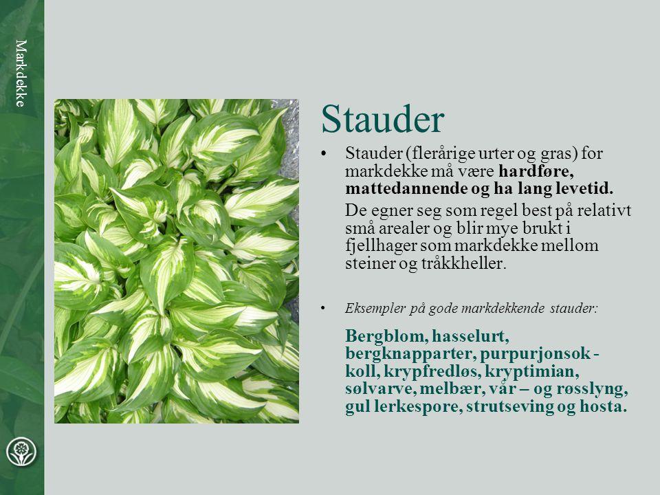 Stauder •Stauder (flerårige urter og gras) for markdekke må være hardføre, mattedannende og ha lang levetid. De egner seg som regel best på relativt s
