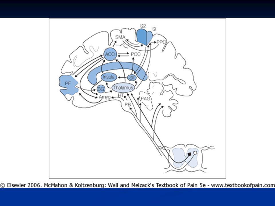 """""""Smertetyper  AKUTT  v/KREFT  KRONISK  Nociceptiv  Smertereseptorer stimuleres  Gikt, artritt,  muskelskjelett  Kreft  Postoperativ  Inflammatorisk  Nevropatisk  Lesjon/dysfunskon av nerver  Diabetisk polynevropati  Herpes zoster  Etter apopleksia cerebri  Viscerale smerte  Fra indre organer  Sympaticus  Parasympaticus"""