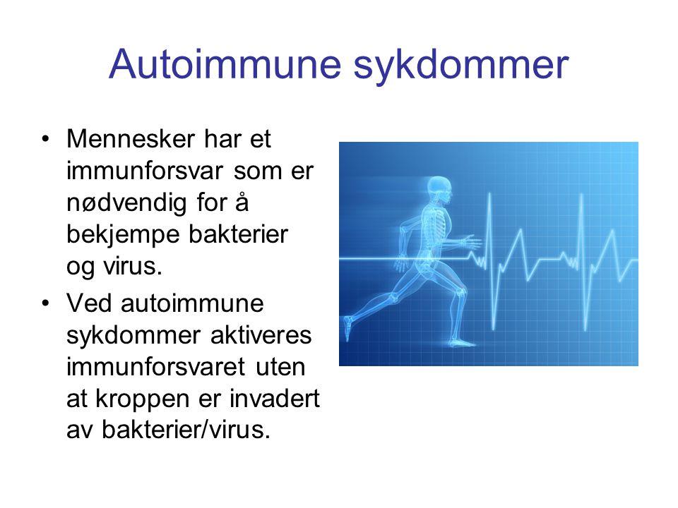 Autoimmune sykdommer •Mennesker har et immunforsvar som er nødvendig for å bekjempe bakterier og virus. •Ved autoimmune sykdommer aktiveres immunforsv