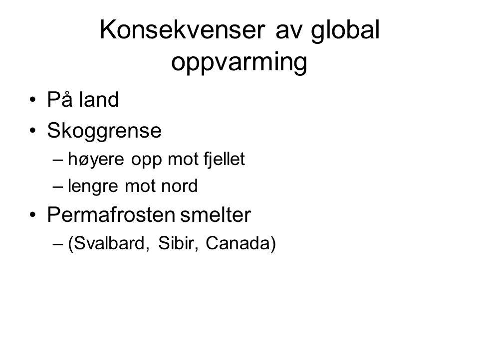 Konsekvenser av global oppvarming •På land •Skoggrense –høyere opp mot fjellet –lengre mot nord •Permafrosten smelter –(Svalbard, Sibir, Canada)
