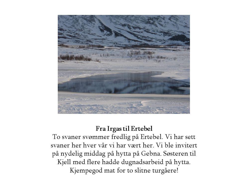 Fra Irgas til Ertebel To svaner svømmer fredlig på Ertebel.