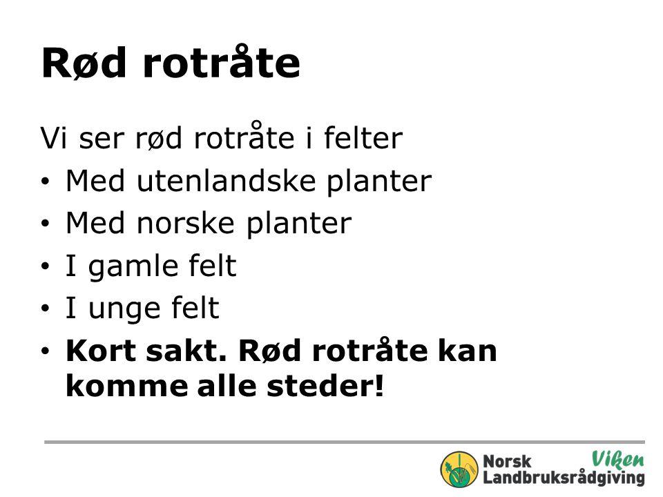 Rød rotråte fortsatt Til nå minst 6 nye tilfelle i 2012 på Østlan- det og mange på Vestlandet også.