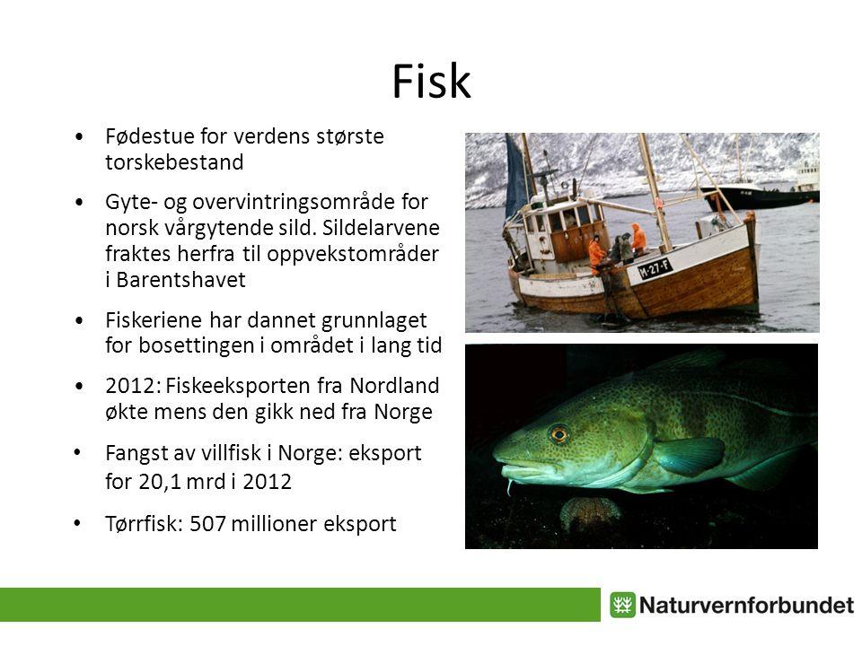 Fisk • Fødestue for verdens største torskebestand • Gyte- og overvintringsområde for norsk vårgytende sild.