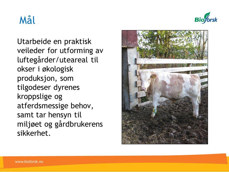 Mål Utarbeide en praktisk veileder for utforming av luftegårder/uteareal til okser i økologisk produksjon, som tilgodeser dyrenes kroppslige og atferdsmessige behov, samt tar hensyn til miljøet og gårdbrukerens sikkerhet.