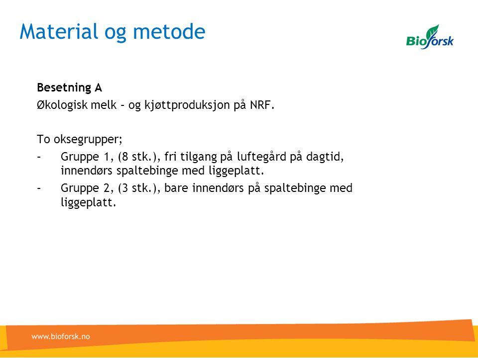 Material og metode Besetning A Økologisk melk – og kjøttproduksjon på NRF.
