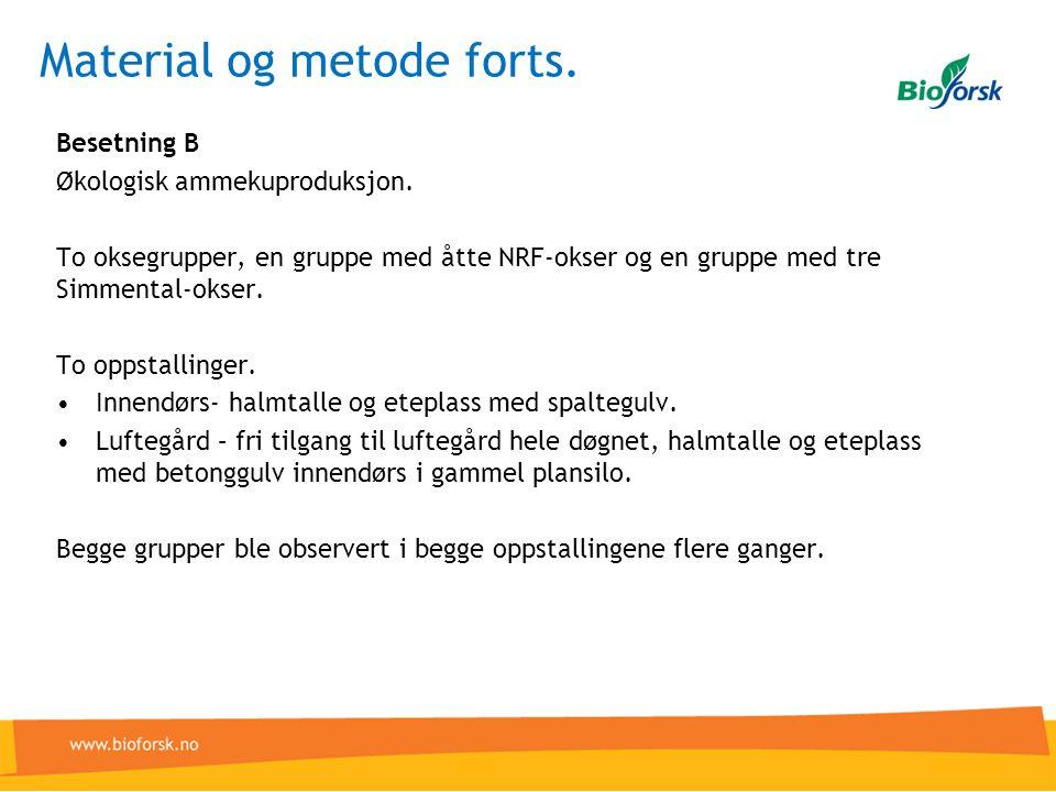 Material og metode forts. Besetning B Økologisk ammekuproduksjon. To oksegrupper, en gruppe med åtte NRF-okser og en gruppe med tre Simmental-okser. T