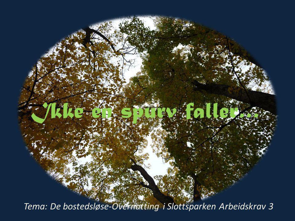 Ikke en spurv faller… Tema: De bostedsløse-Overnatting i Slottsparken Arbeidskrav 3