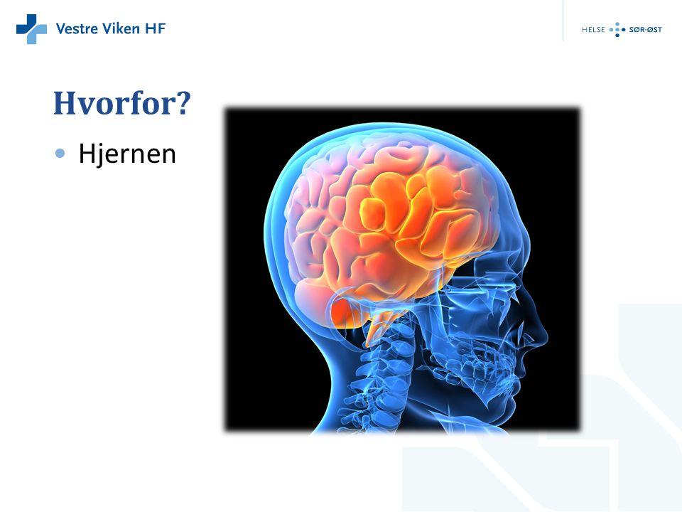 Hvorfor? •Hjernen