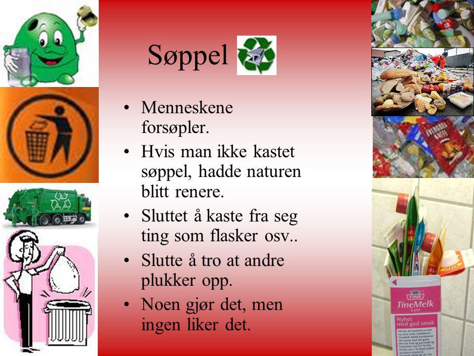 Søppel •Menneskene forsøpler. •Hvis man ikke kastet søppel, hadde naturen blitt renere. •Sluttet å kaste fra seg ting som flasker osv.. tro •Slutte å