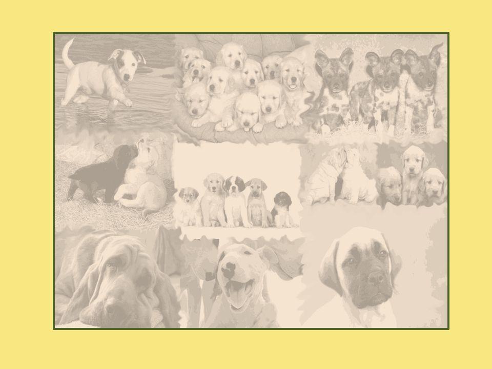 Briefing Kunden ønsker å starte en butikk spesielt for hund, med et helhetlig og tydelig visuelt konsept.