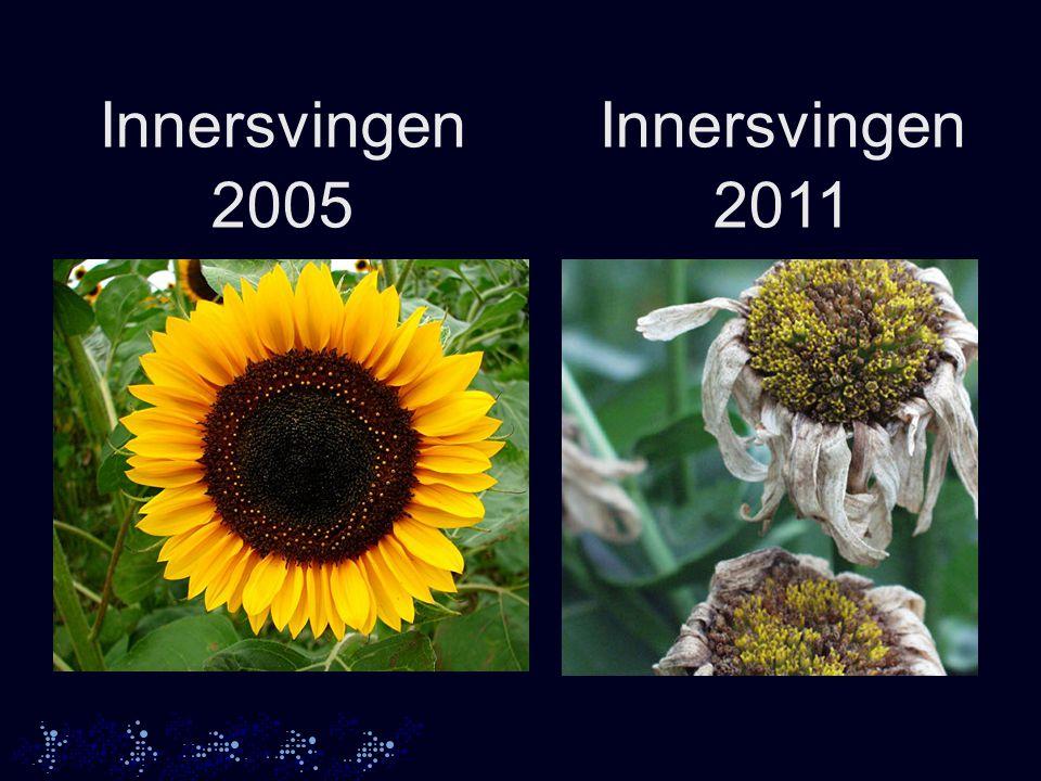 Innersvingen 2005 Innersvingen 2011