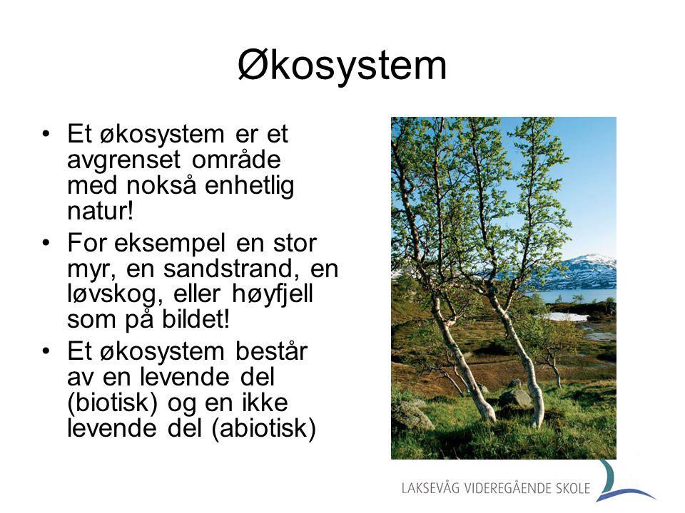•Et økosystem er et avgrenset område med nokså enhetlig natur! •For eksempel en stor myr, en sandstrand, en løvskog, eller høyfjell som på bildet! •Et