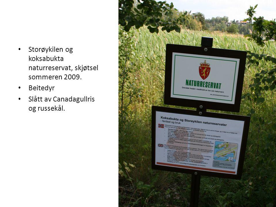 • Storøykilen og koksabukta naturreservat, skjøtsel sommeren 2009.