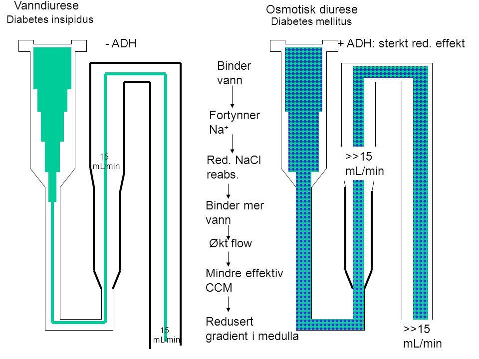 300 1200 350 Kan ikke danne gradient, forsinker utvaskningen av eksisterende gradient Fjerner også reabsorbert væske fra samlerør Den aktive transport