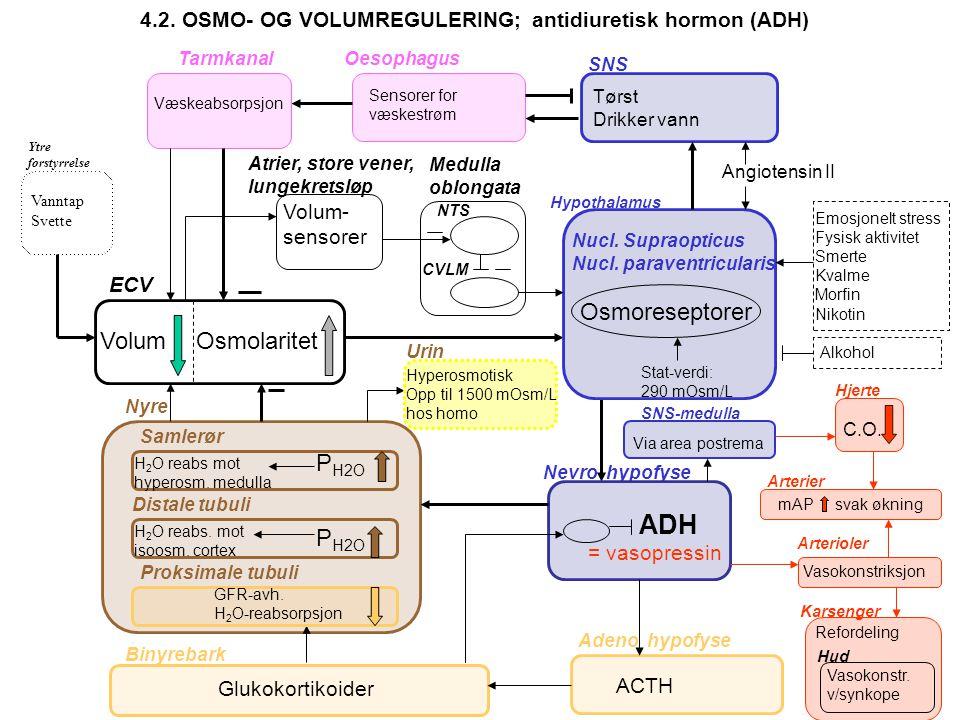 50-100 mmol/døgn HVORFOR REGULERE Holde mAP konstant Holde intracellulært volum konstant Ha kontroll med membran-eksitabilitet Ha kontroll med Protein