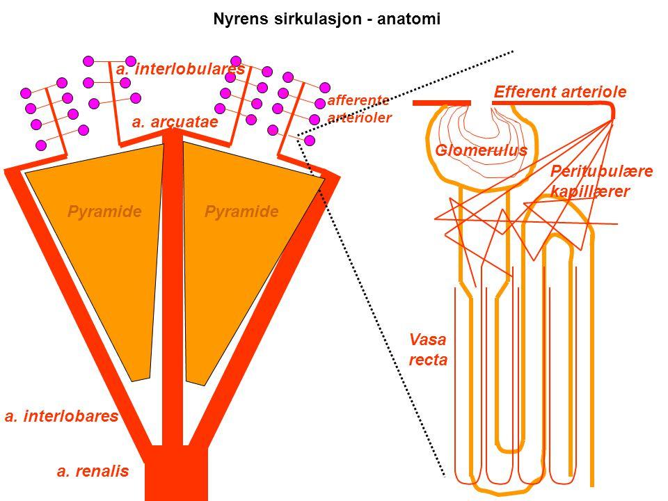 I alle tilfelle: Effektiv reabs pga stimulert aktiv transport av Na +