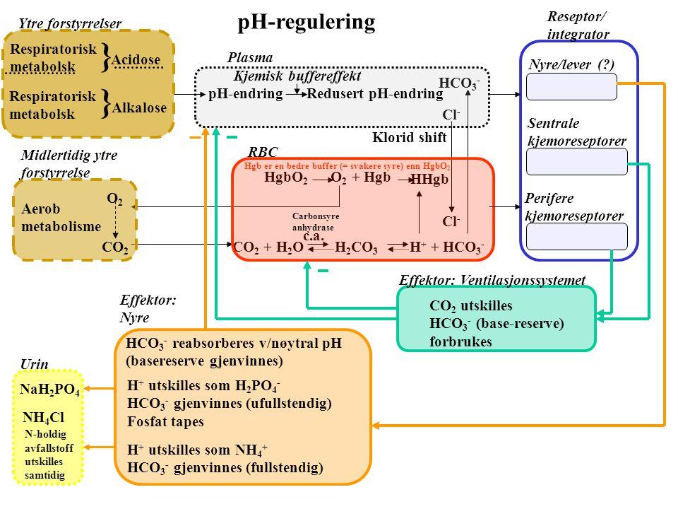 Na + 3Na + 2K + K+K+ ATP ADP+P i 0 E Na Terskel EmEm EKEK Cl - [K + ] o & [Cl - ] o øker Konsentrasjonsgradient reduseres [K + ] i øker E K og E m red