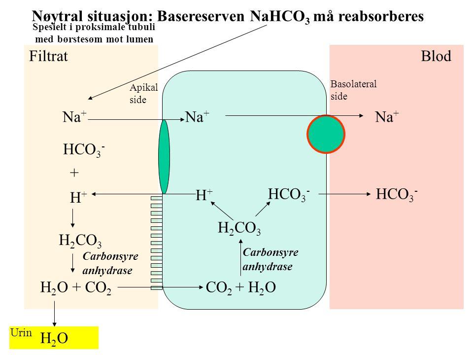 Midlertidig ytre forstyrrelse HgbO 2 O 2 + Hgb CO 2 + H 2 O H 2 CO 3 H + + HCO 3 - c.a. Cl - HCO 3 - HHgb RBC Plasma Respiratorisk metabolsk Respirato