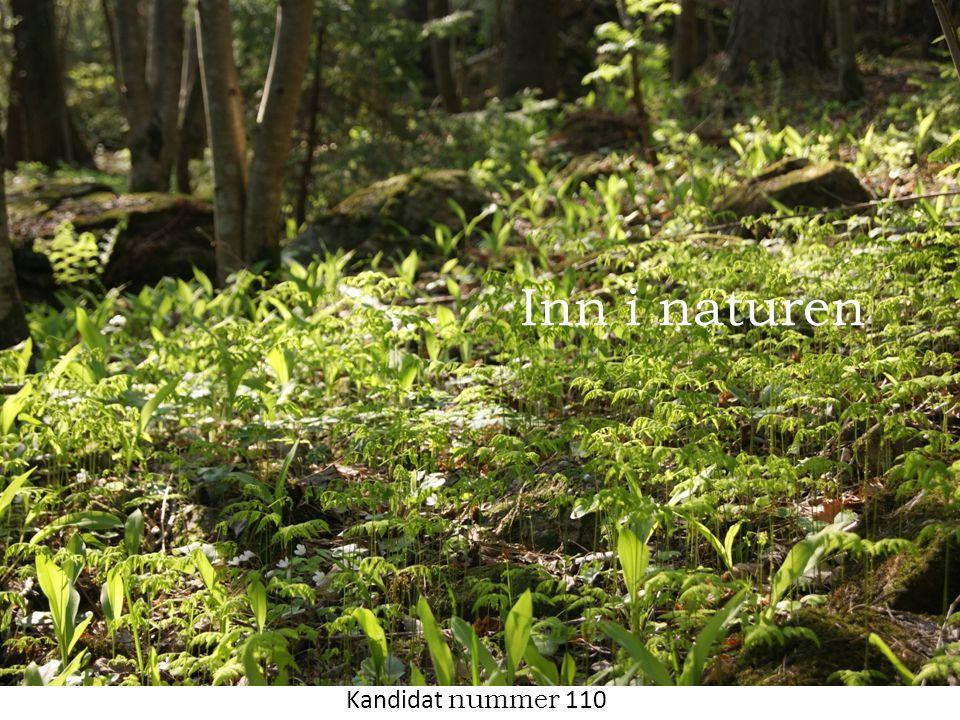 • Er skogen innbydende.• Har damen lyst til å gå inn.