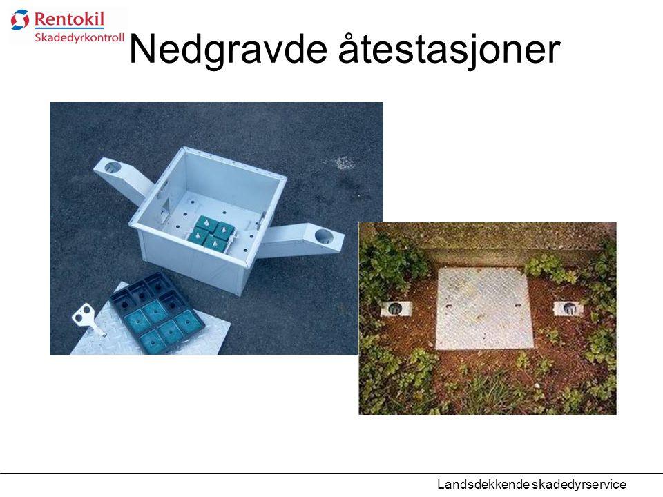Nedgravde åtestasjoner Landsdekkende skadedyrservice