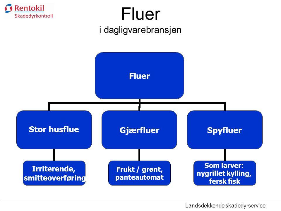Fluer i dagligvarebransjen Fluer Stor husflue Irriterende, smitteoverføring Gjærfluer Frukt / grønt, panteautomat Spyfluer Som larver: nygrillet kylli
