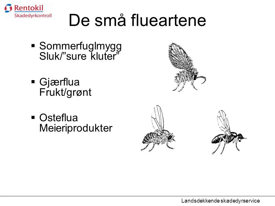 """De små flueartene  Sommerfuglmygg Sluk/""""sure kluter""""  Gjærflua Frukt/grønt  Osteflua Meieriprodukter Landsdekkende skadedyrservice"""