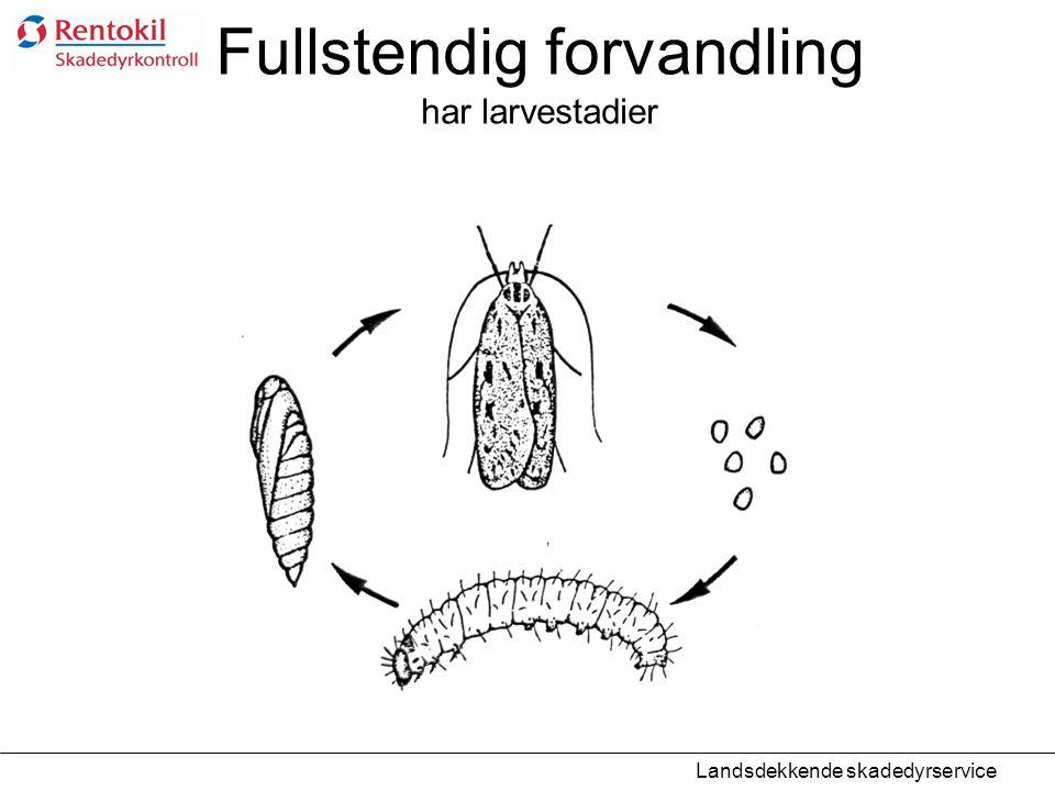 Fullstendig forvandling har larvestadier Landsdekkende skadedyrservice