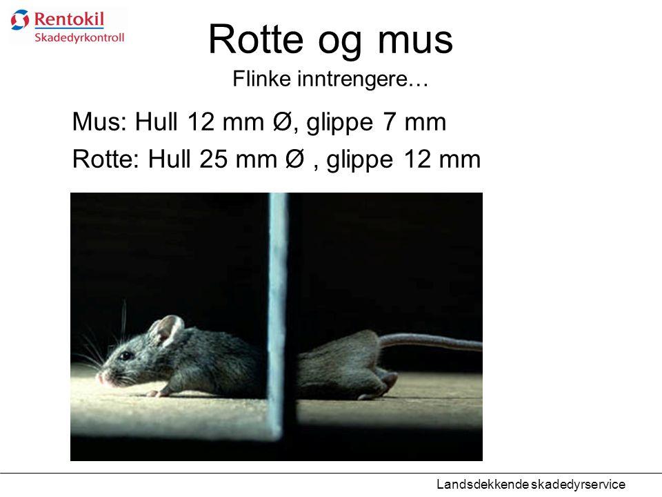 Rotte og mus Flinke inntrengere… Mus: Hull 12 mm Ø, glippe 7 mm Rotte: Hull 25 mm Ø, glippe 12 mm Landsdekkende skadedyrservice
