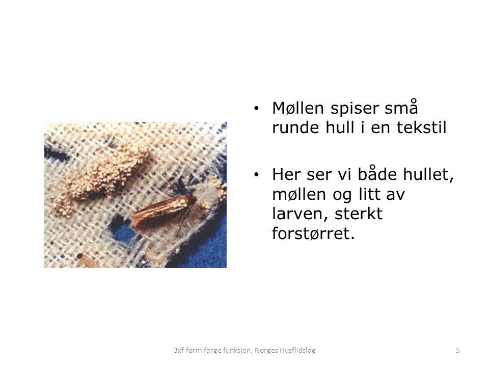 • Møllen spiser små runde hull i en tekstil • Her ser vi både hullet, møllen og litt av larven, sterkt forstørret. 3xf form farge funksjon. Norges Hus