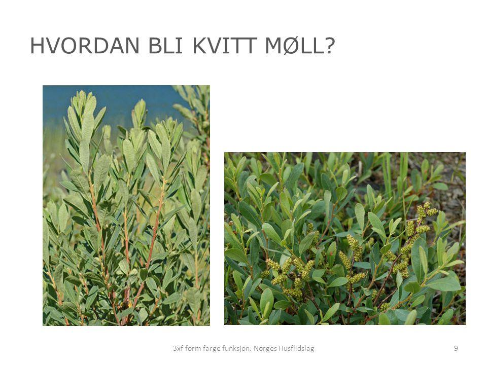 HVORDAN BLI KVITT MØLL? 93xf form farge funksjon. Norges Husflidslag