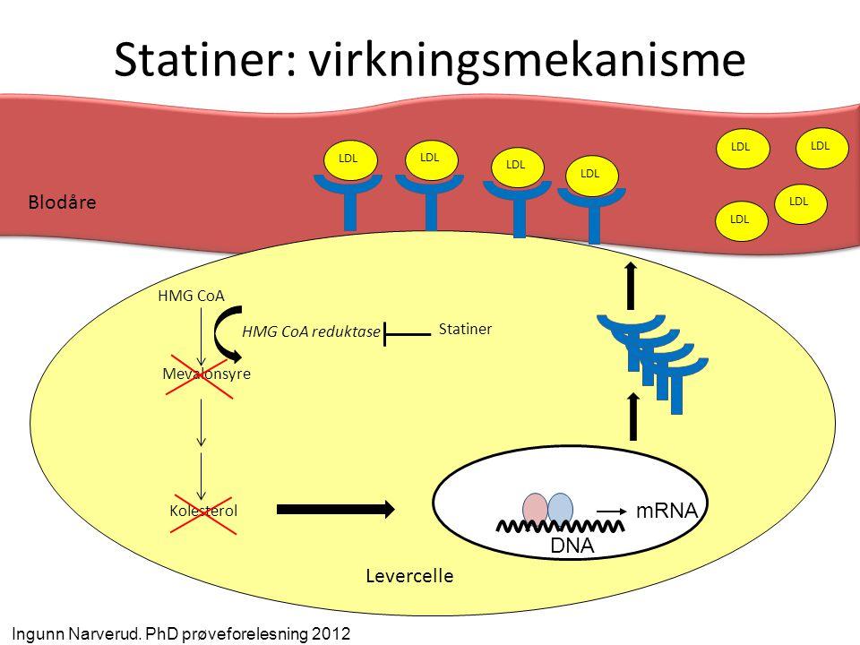 Statiner: virkningsmekanisme HMG CoA Mevalonsyre HMG CoA reduktase Kolesterol Statiner mRNA DNA LDL Levercelle LDL Blodåre Ingunn Narverud. PhD prøvef