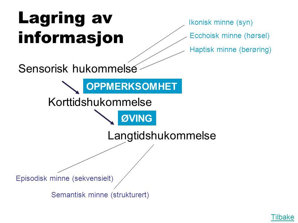 Sensorisk hukommelse Korttidshukommelse Langtidshukommelse Lagring av informasjon Ikonisk minne (syn) Ecchoisk minne (hørsel) Haptisk minne (berøring)