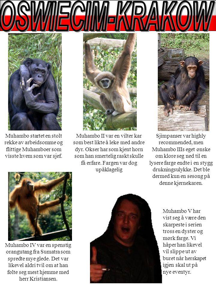 Muhambo IV var en spenstig orangutang fra Sumatra som spredte mye glede.