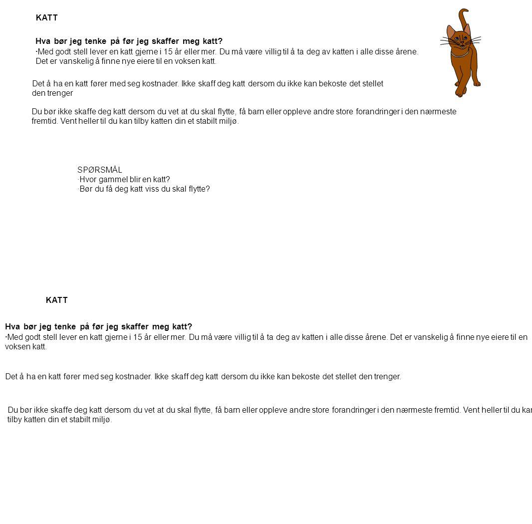 Hva bør jeg tenke på før jeg skaffer meg katt? · Med godt stell lever en katt gjerne i 15 år eller mer. Du må være villig til å ta deg av katten i all
