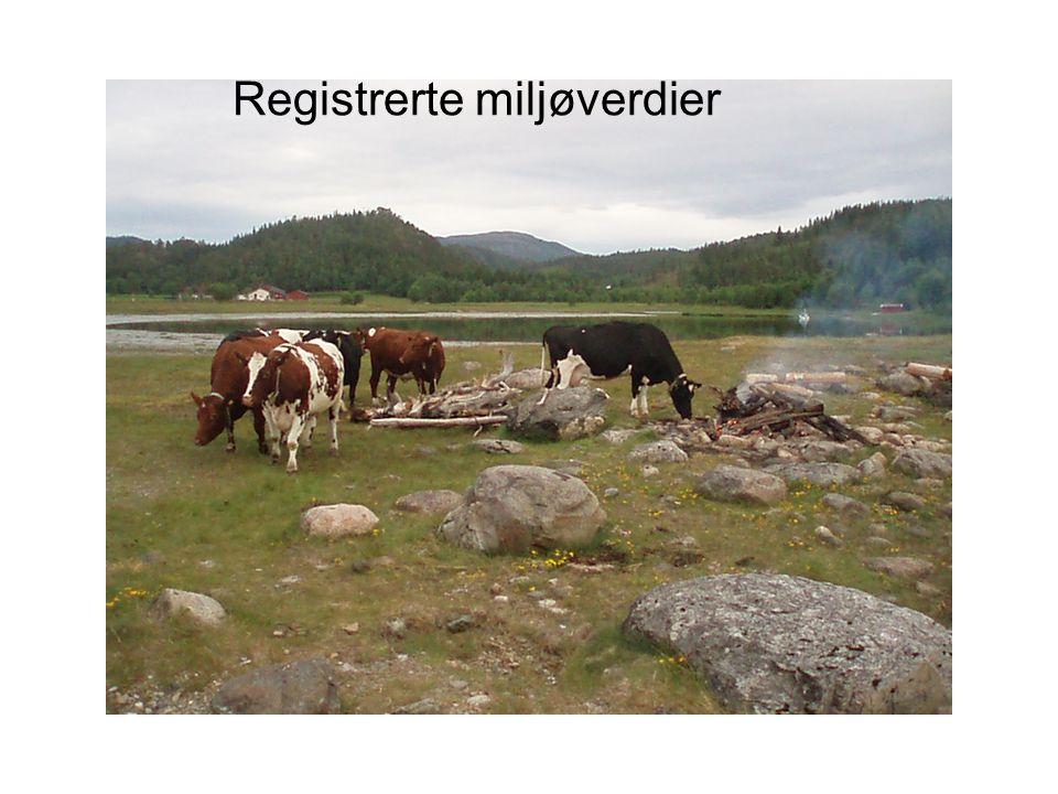 Registrerte miljøverdier