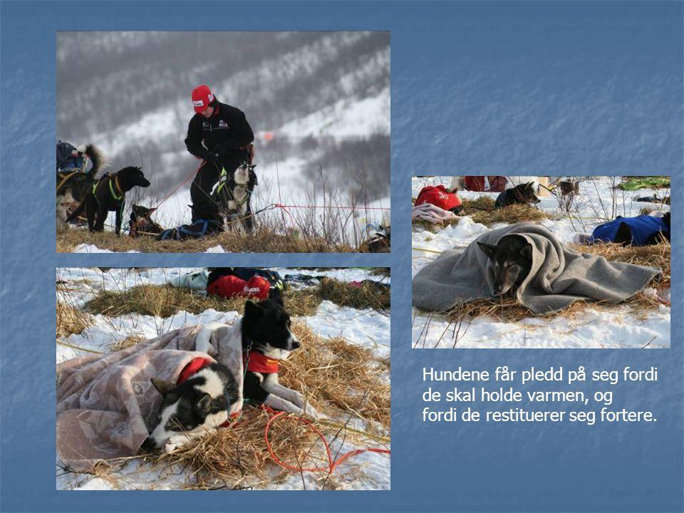 Hundene får pledd på seg fordi de skal holde varmen, og fordi de restituerer seg fortere.