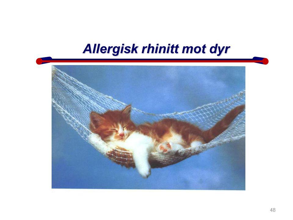 48 Allergisk rhinitt mot dyr 48