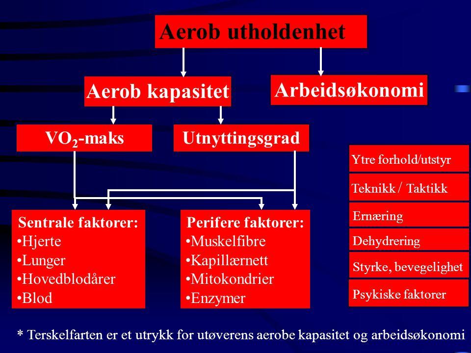 Aerob utholdenhet VO 2 -maksUtnyttingsgrad Sentrale faktorer: •Hjerte •Lunger •Hovedblodårer •Blod Perifere faktorer: •Muskelfibre •Kapillærnett •Mitokondrier •Enzymer Arbeidsøkonomi Ernæring Dehydrering Styrke, bevegelighet Aerob kapasitet * Terskelfarten er et utrykk for utøverens aerobe kapasitet og arbeidsøkonomi Ytre forhold/utstyr Teknikk / Taktikk Psykiske faktorer