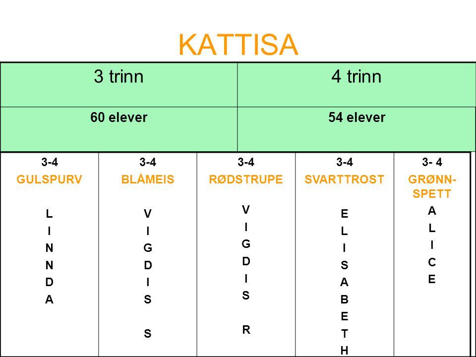 KATTISA 3 trinn4 trinn 60 elever54 elever 3-4 GULSPURV L I N D A 3-4 BLÅMEIS V I G D I S 3-4 RØDSTRUPE V I G D I S R 3-4 SVARTTROST E L I S A B E T H 3- 4 GRØNN- SPETT A L I C E