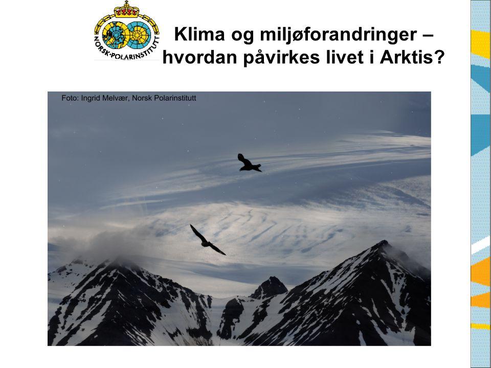 Klima og miljøforandringer – hvordan påvirkes livet i Arktis?
