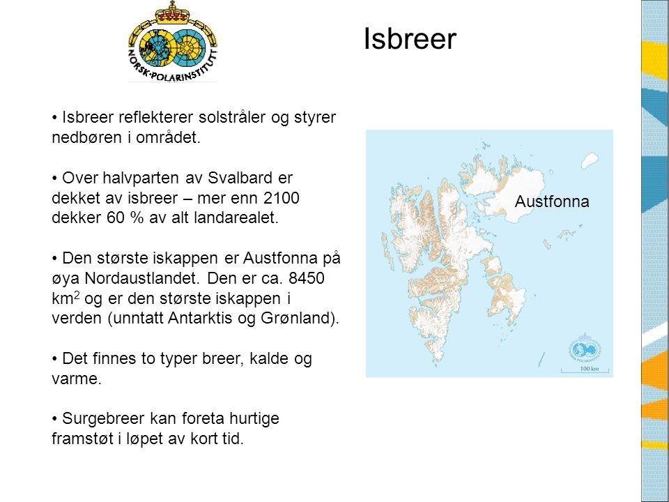 Isbreer • Isbreer reflekterer solstråler og styrer nedbøren i området. • Over halvparten av Svalbard er dekket av isbreer – mer enn 2100 dekker 60 % a