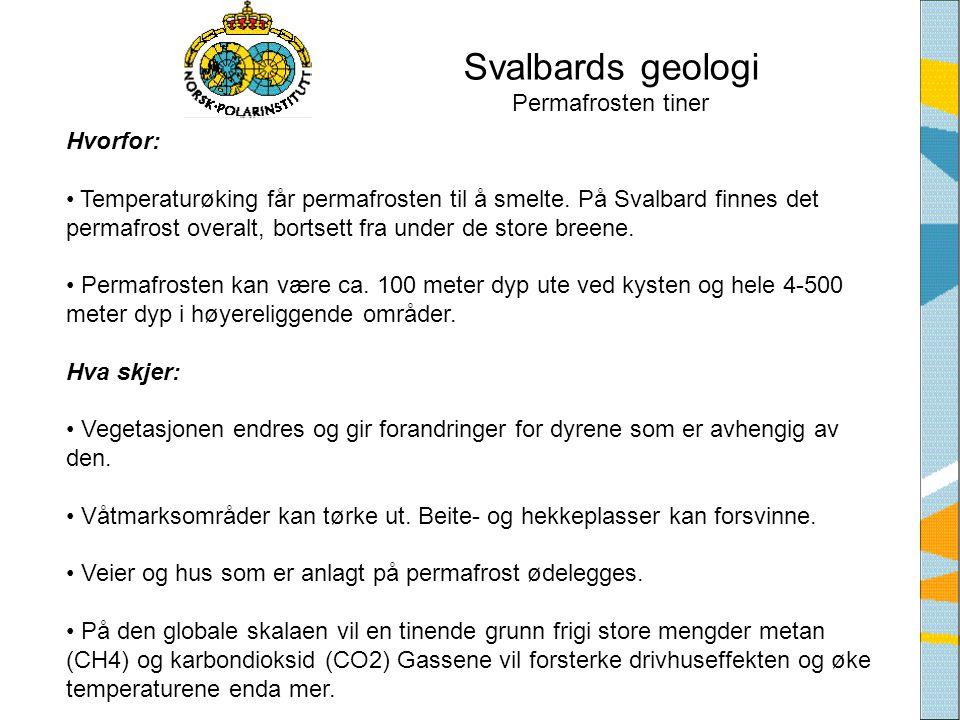 Svalbards geologi Permafrosten tiner Hvorfor: • Temperaturøking får permafrosten til å smelte. På Svalbard finnes det permafrost overalt, bortsett fra