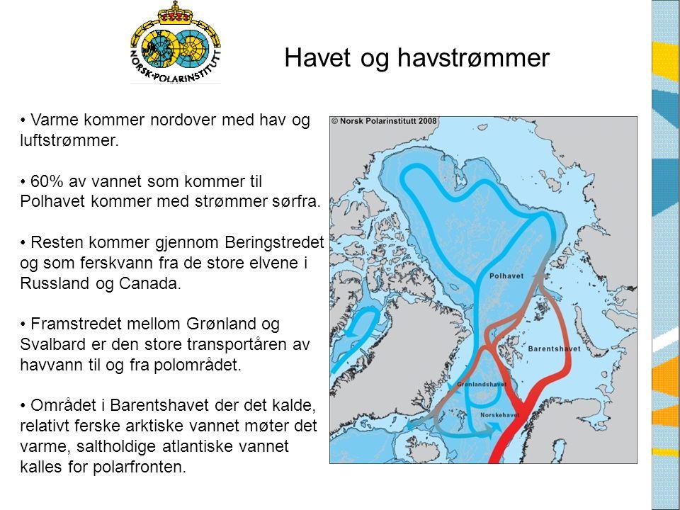 Havet og havstrømmer • Varme kommer nordover med hav og luftstrømmer. • 60% av vannet som kommer til Polhavet kommer med strømmer sørfra. • Resten kom