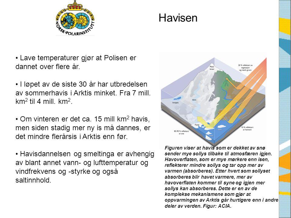 Havisen • Lave temperaturer gjør at Polisen er dannet over flere år. • I løpet av de siste 30 år har utbredelsen av sommerhavis i Arktis minket. Fra 7