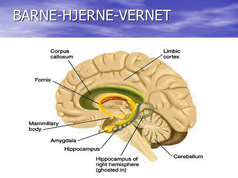 Den bruksavhengige hjernen • Født med mer enn 100 milliarder celler • Det finnes ikke noe mer biologisk enn erfaringer • Erfaringene bygger hjernen i et intimt samspill med genene • Alle erfaringer som fører til nye ferdigheter eller atferdsendringer har koblet opp nye, konkrete, synaptiske og biokjemiske strukturer i hjernen.