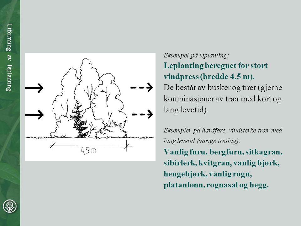 Eksempel på leplanting: Leplanting beregnet for stort vindpress (bredde 4,5 m). De består av busker og trær (gjerne kombinasjoner av trær med kort og
