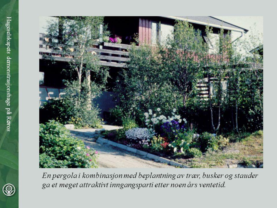 En pergola i kombinasjon med beplantning av trær, busker og stauder ga et meget attraktivt inngangsparti etter noen års ventetid. Hageselskapets demon