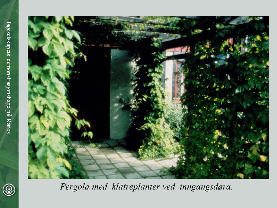 Pergola med klatreplanter ved inngangsdøra. Hageselskapets demonstrasjonshage p å R ø ros