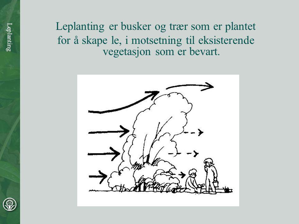 Leplanting Leplanting er busker og trær som er plantet for å skape le, i motsetning til eksisterende vegetasjon som er bevart.